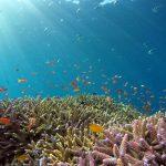 Koralni grebeni ‒ značaj za planetu